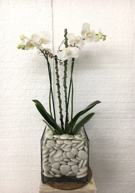 1or.w.Orchid Glass container