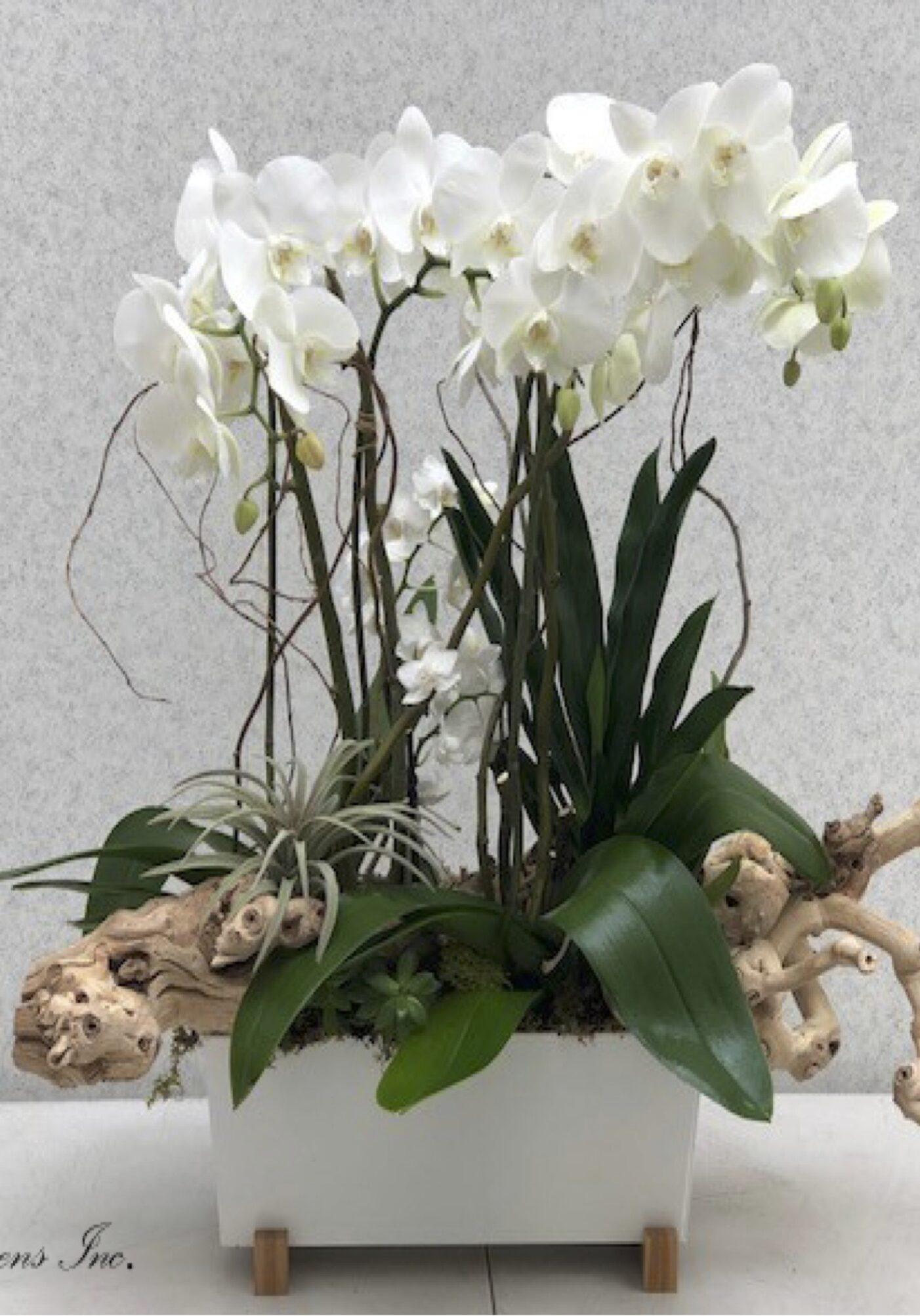 w.White Orchid Arrangement